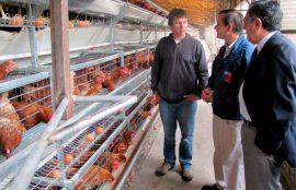 Proyecto sobre protección de huevos contra Salmonellas de UST Temuco se adjudicó fondo CORFO