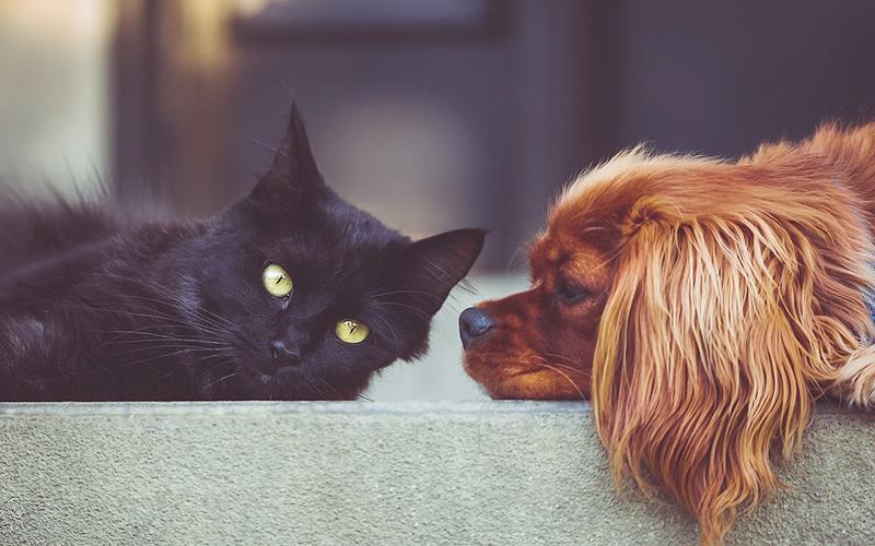 ¿Qué pasará con nuestras mascotas cuando se inicie el ...