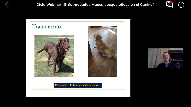 """Estudiante por Webinar de Medicina Veterinaria: """"Muy b ..."""