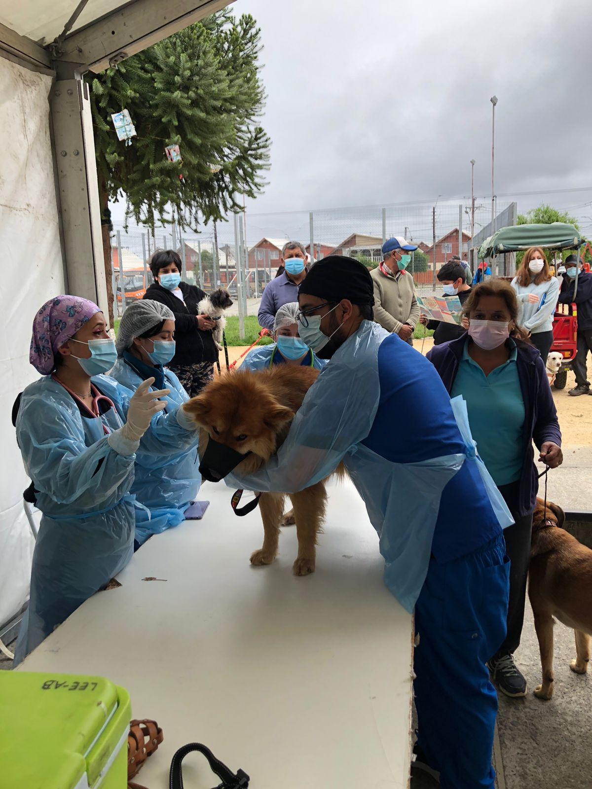 Estudiantes realizan operativo de vacunación y actividades preventivas de Zoonosis