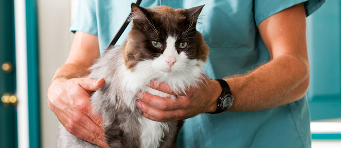 Diplomado en Medicina Interna de Animales de Compañía