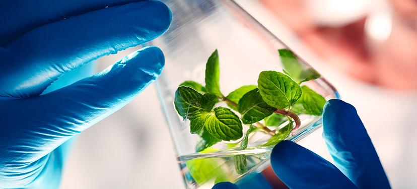 : Cultura científica en Biotecnología: estudio prospectivo en base a expertos
