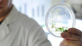 Austral Biotech
