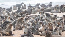Bases etológicas de la interacción del lobo marino común y la pesca artesanal para el diseño de medidas de mitigación