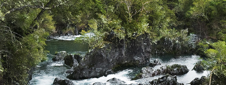 UST acredita el Doctorado en Conservación y Gestión de la Biodiversidad